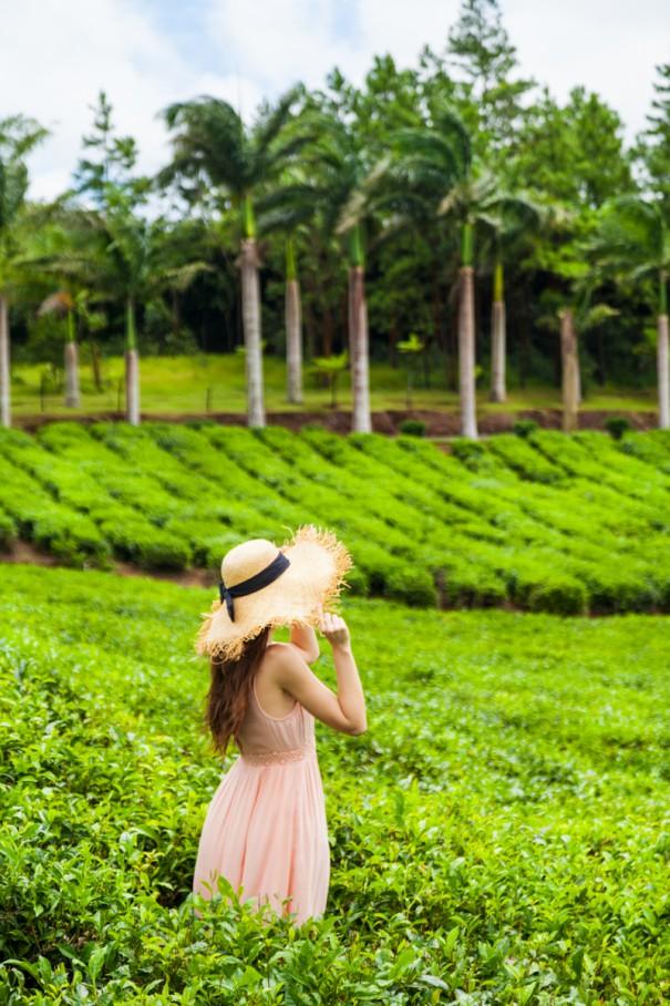 bois cheri mauritius | piantagioni di foglie di the