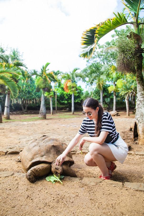 vanille nature park mauritius tartarughe