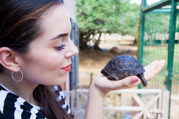 mauritius tartarughe