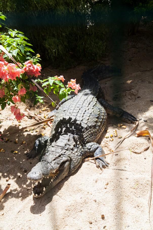 mauritius vanille nature park