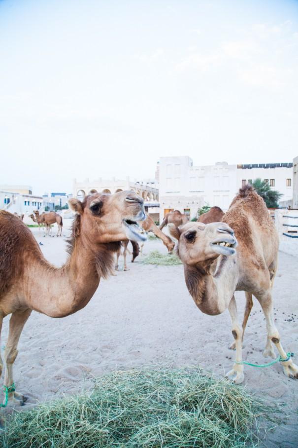 cammelli SOUQ WAQIF