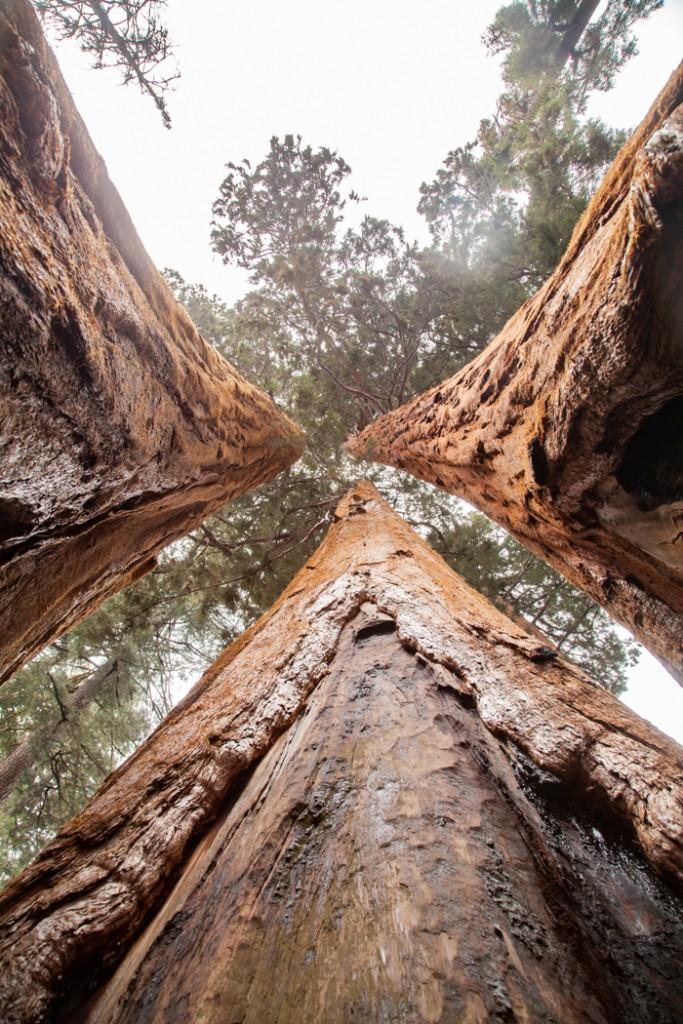 cosa vedere in california san francisco e sequoia park-12