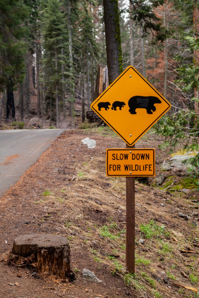 cosa vedere in california san francisco e sequoia park-2