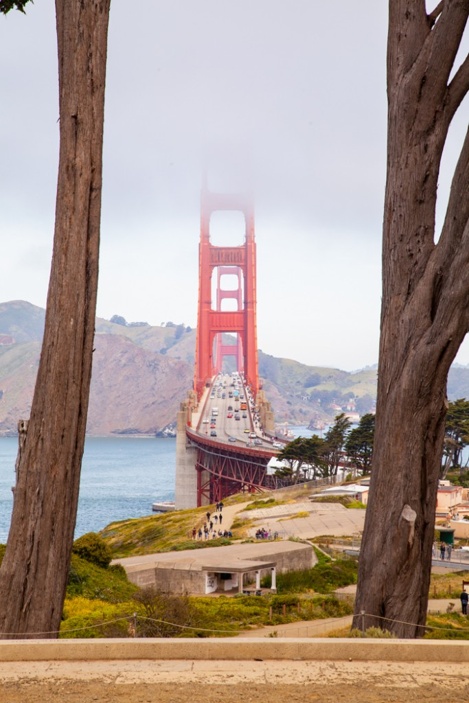 cosa vedere in california san francisco e sequoia park-32