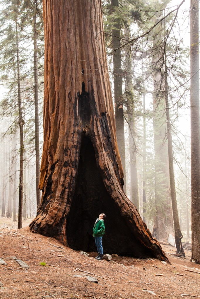 cosa vedere in california san francisco e sequoia park-5