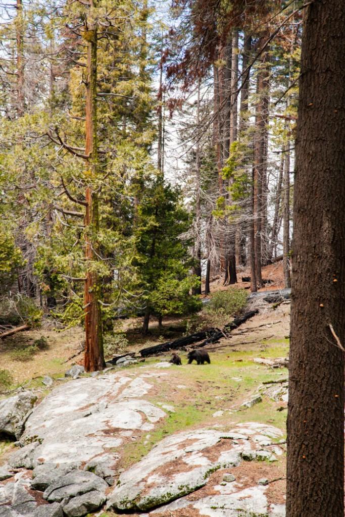 cosa vedere in california san francisco e sequoia park-6