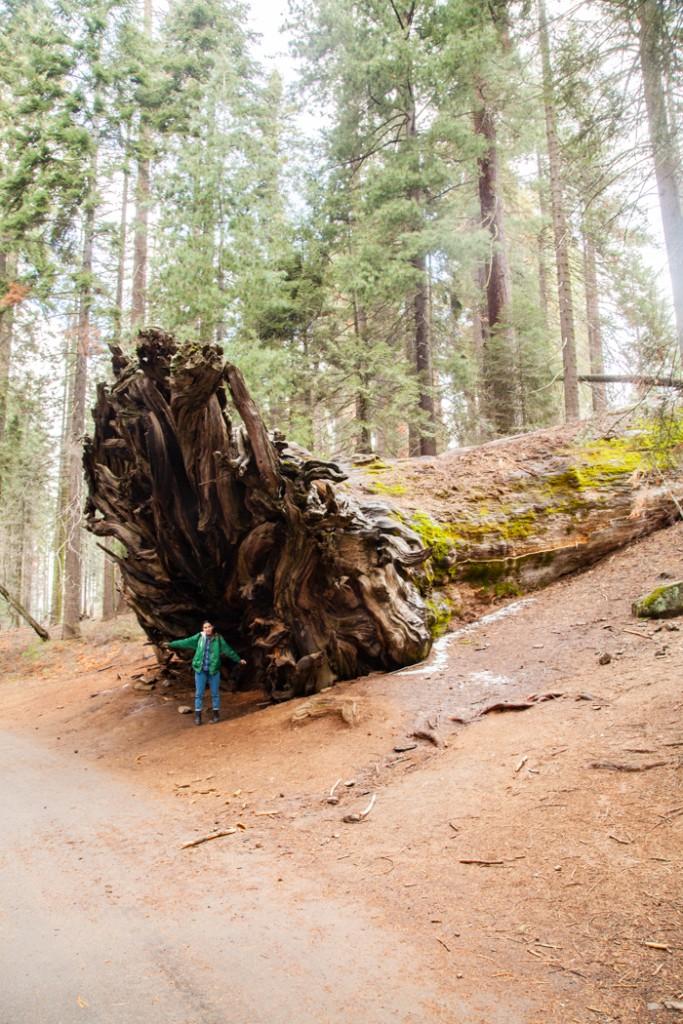 cosa vedere in california san francisco e sequoia park-8