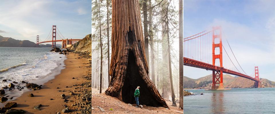 san francisco e sequoia park